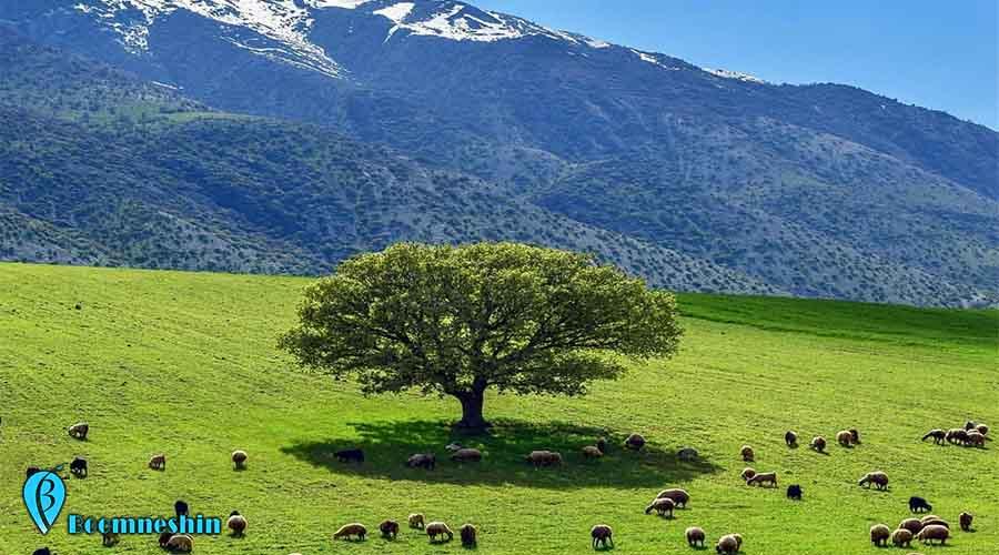 مخمل کوه لرستان ، سرزمین قلههای سر به فلک کشیده، چشمههای جوشان1.jpg
