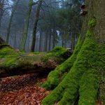 چند باور نادرست از طبیعت که باید بدانید