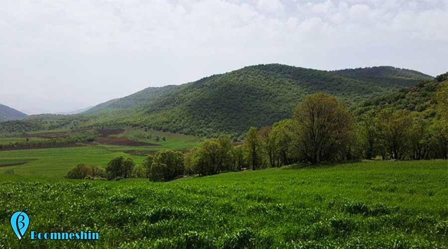 جنگل نای انگیز، بهشت واقعی استان لرستان