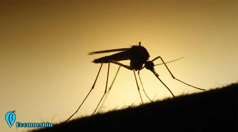 راهکارهایی برای مقابله با نیش حشرات در سفر
