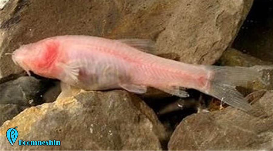 دورود پایتخت طبیعت ایران که تنها زیستگاه «ماهی کور» در جهان است
