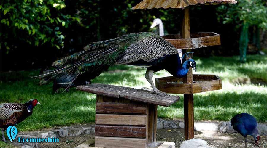 باغ پرندگان اصفهان کجاست؟