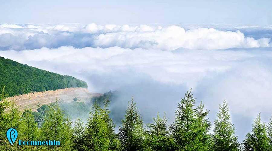 جنگل ابر، جنگلی که در میان اقیانوسی از ابر است