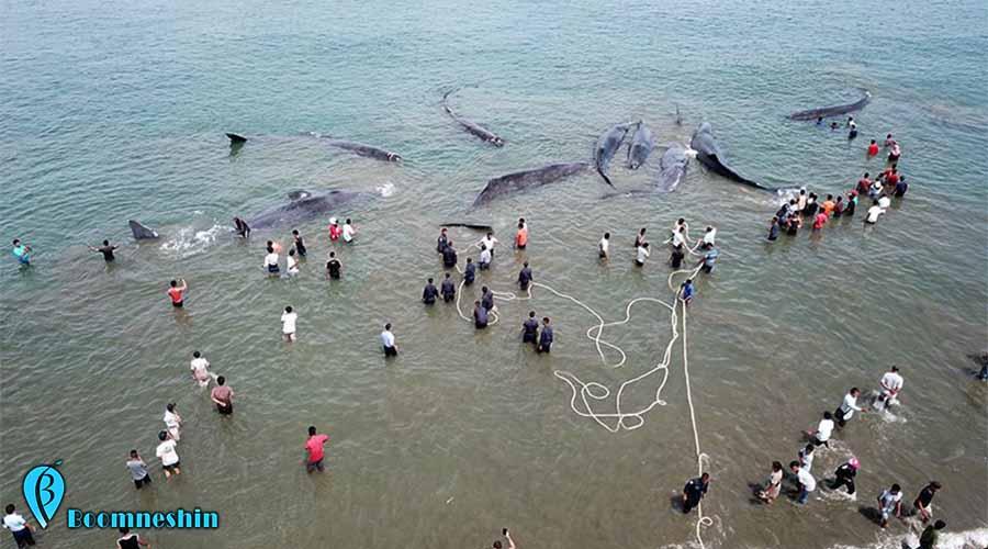 علت مرگ سریالی نهنگ ها در جزیره کیش مشخص شد